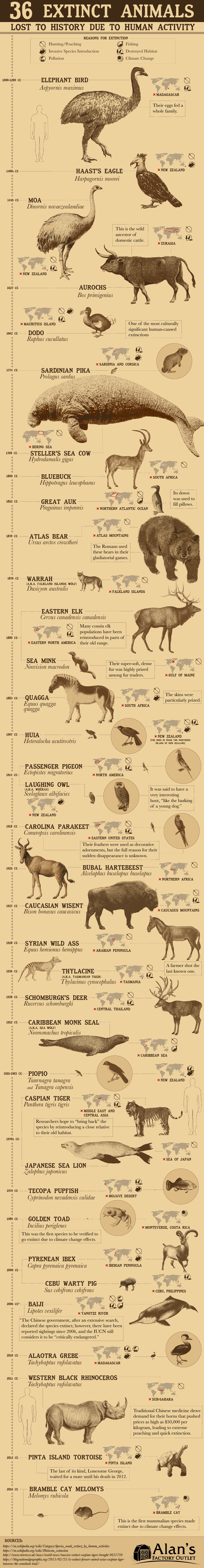 36 Extinct Animals Lost Due to Human Activity - AlansFactoryOutlet.com - Infographic