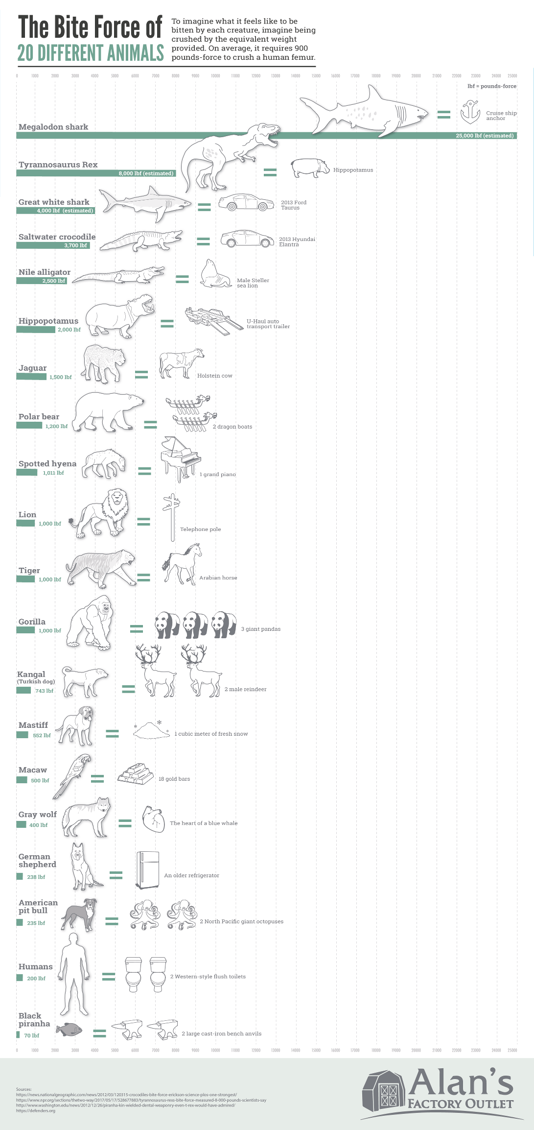 The Bite Force of Different Animals - AlansFactoryOutlet.com - Infographic